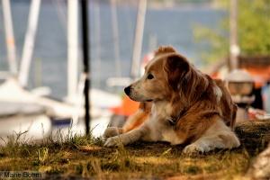 Drömmande hund i Saltsjöbaden.