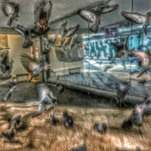 Duvor flyger under Sergels torg