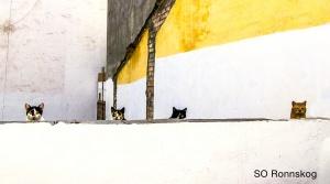 Spanska katter