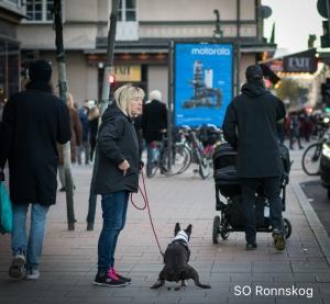 Nödig hund, Götgatan